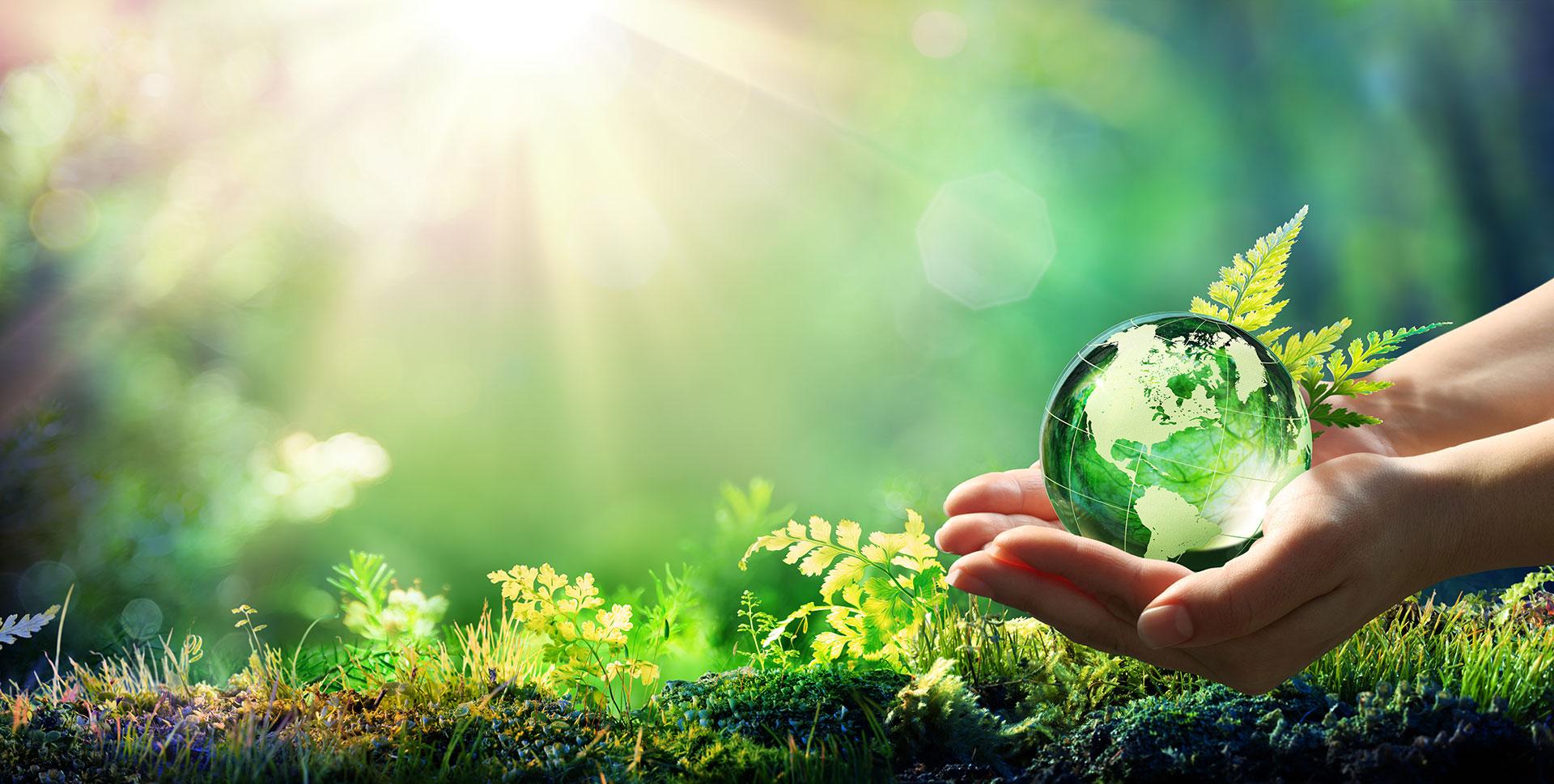 1º Aniversário da BUSINESS as NATURE – Desafios da Sustentabilidade Pós COVID-19